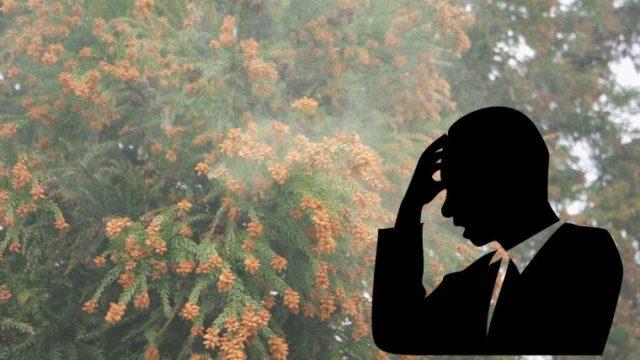 ブログ「モノオス」スギの花粉でサラリーマンが苦しんでいる画像(スギの現状と2035年になっても花粉症が減らない理由)